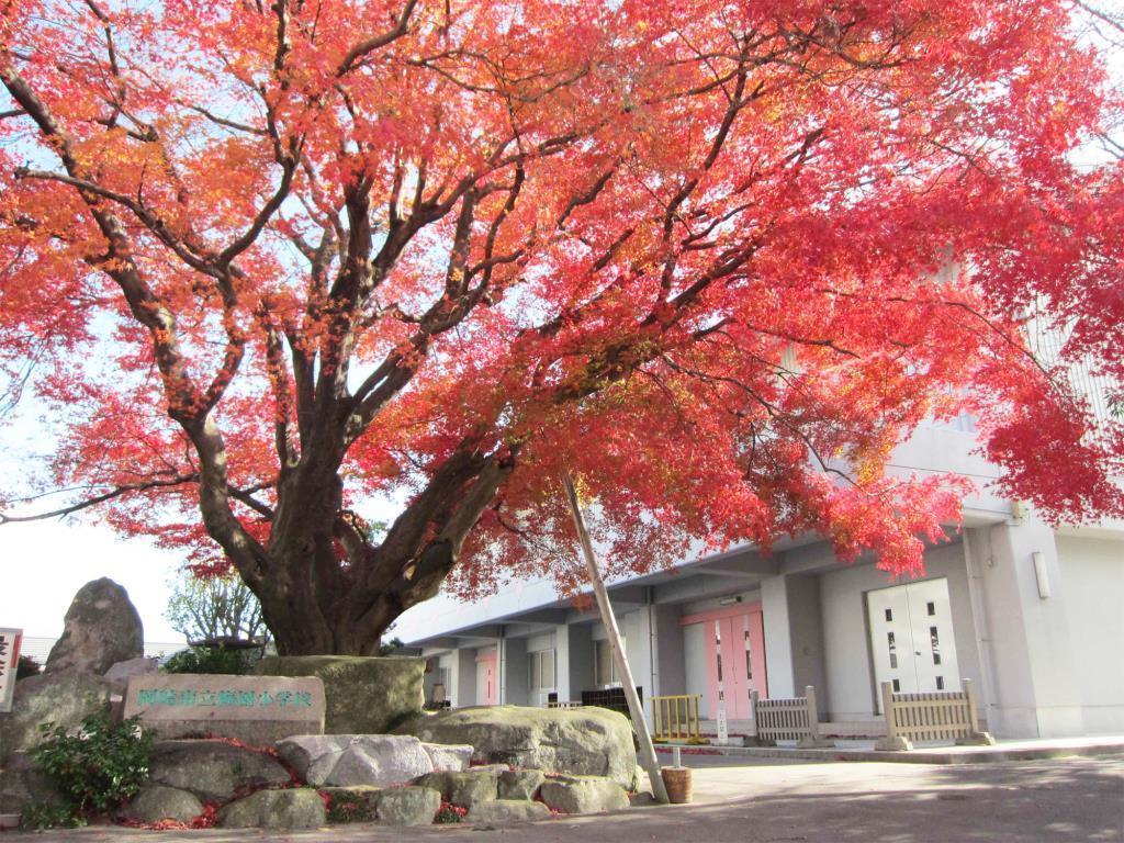 梅園小学校(周辺)